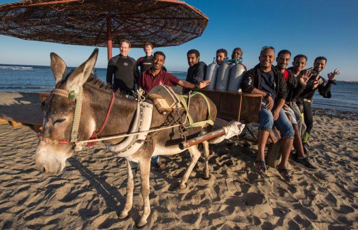 Die Crew: Extradivers mit Esel.