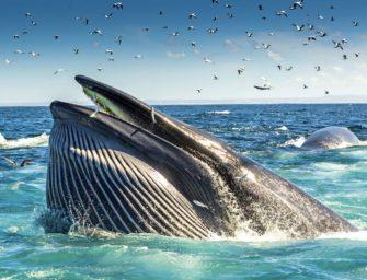 »Der Insider – Ein Mann wird vom Wal verschluckt … «
