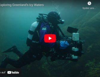 Erster fluoreszierender Fisch in der Arktis gefunden