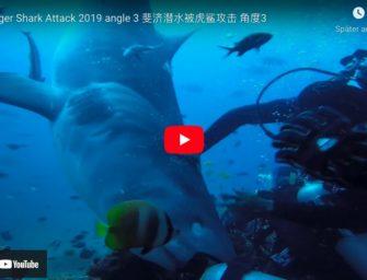 Hai-Fütterung auf den Fijis endet mit Schrecken