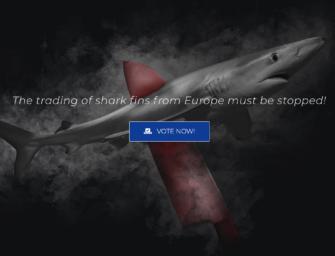 Shark Awareness Day 2021