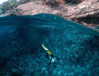 Die Unterwasserwelt der Adria entdecken!