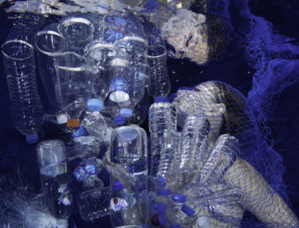 Galerie im August: Ocean Geographic Society